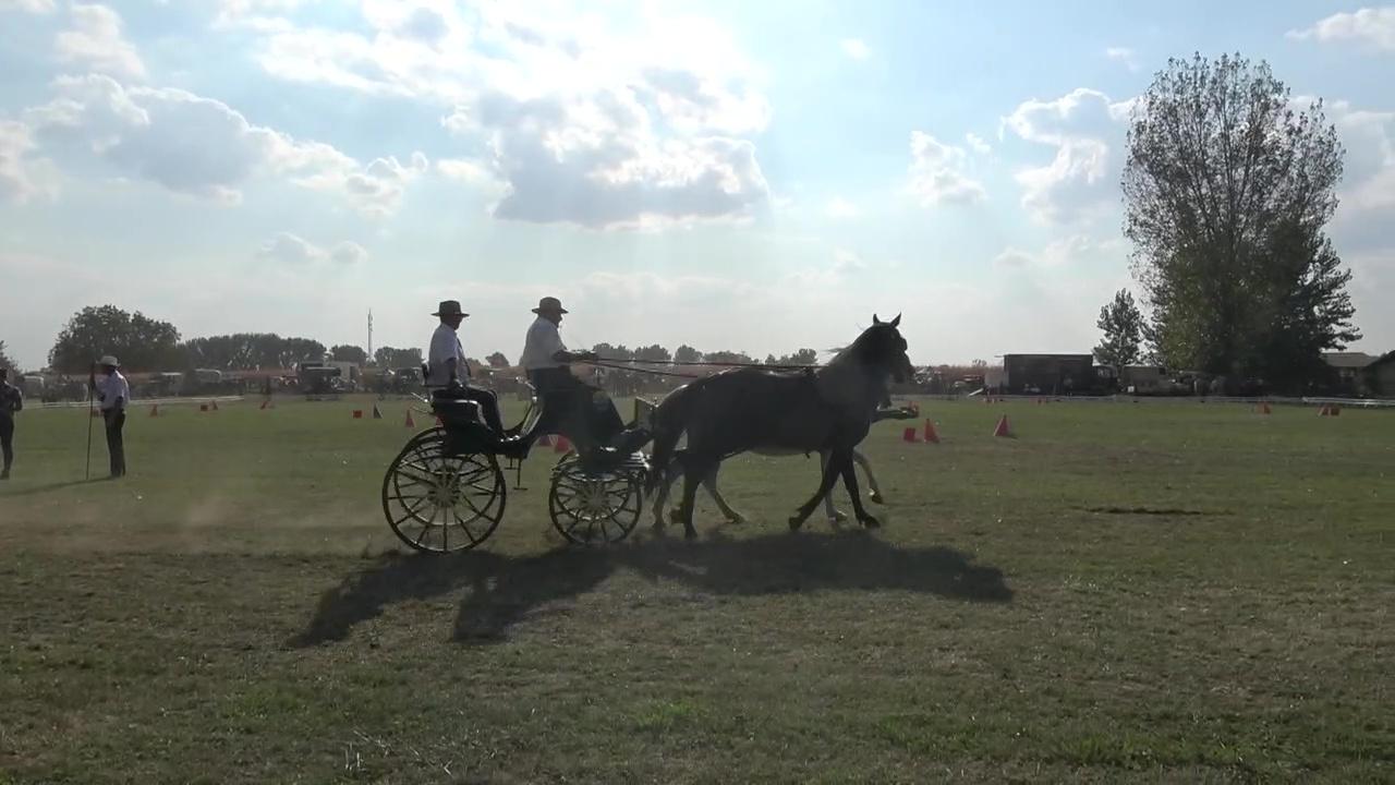 Jubileumi lovasnap Felgyőn